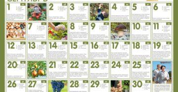 Календарь садовода и огородника на сентябрь