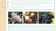 Зимостойкость растений и способы ее повышения
