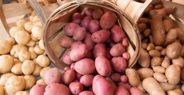 Картофель: выбор сорта