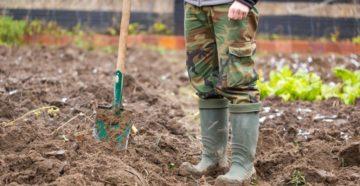 Типичные ошибки садоводов и огородников