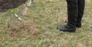 Восстановление газона весной: полив, подкормка, вычесывание, стрижка, подсев