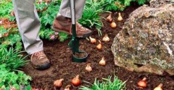 Что делать в огороде и цветнике в ноябре