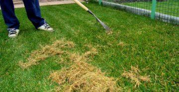 Газон на даче: виды, травы, правила посева и ухода
