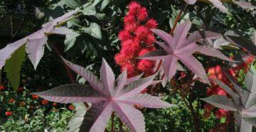 Опасные декоративные растения