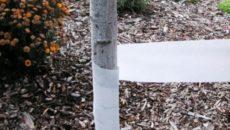 Защита стелющихся яблонь от грызунов