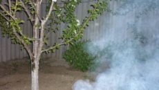 Работы в саду весной: лечим деревья, спасаем от заморозков