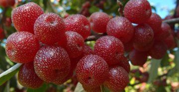Необычные плодовые и ягодники