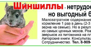 Шиншилла - сверхдоходный зверек. Антикризисная программа