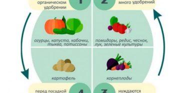 Севооборот: правила хорошего урожая