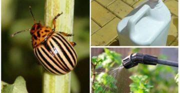 Эффективные методы борьбы с колорадским жуком