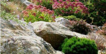 Камни и растения для альпинария