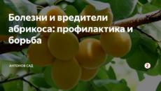Болезни и вредители абрикоса: профилактика и борьба
