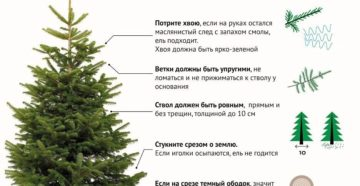 Как выбрать и сохранить новогоднюю елку