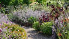 Лекарственный сад