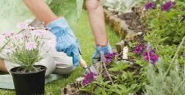 Июньские работы в саду