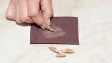 Подготовка семян к посеву: скарификация