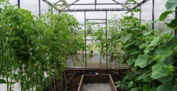 Июль: уход за томатами и огурцами
