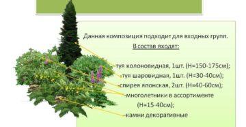 Группы хвойных по высоте: виды растений и основы композиции