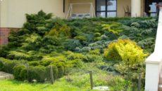 Растения для укрепления склона