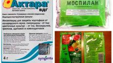 Как избавиться от белокрылки в теплице: эффективные препараты и народные средства