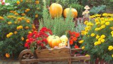 Работы в цветнике в сентябре