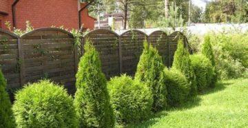Живая изгородь из кустарников: какие выбрать и как правильно посадить