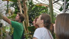 Приглашаем на экскурсии в ботанический сад Новосибирска