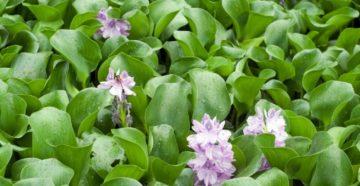 Растения для очистки водоемов