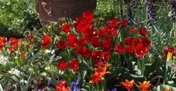 Цветник в мае