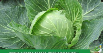 5 секретов урожая цветной капусты