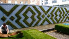 Эко-граффити: украшаем стены мхом