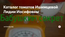 Каталог томатов Ишимцевой Лидии Иосифовны