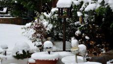 Работы в декабре в саду, огороде и цветнике