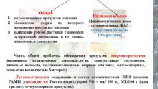 Профилактика гиповитаминоза