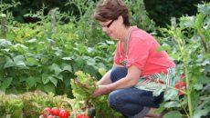 Огород в июле: что делать