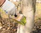 Побелка деревьев осенью с креолином