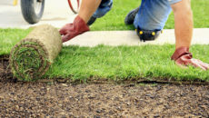 Газон на участке: посев, укладка и уход
