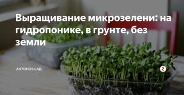 Выращивание микрозелени: на гидропонике, в грунте, без земли