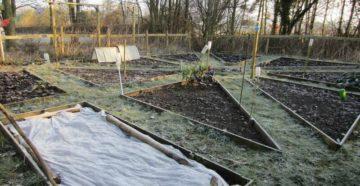 Что делать в апреле в саду и огороде