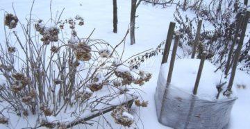 Деревья и кустарники зимой: как подготовить, чем укрыть и защитить от повреждений