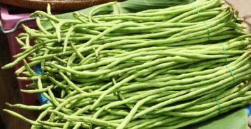 Спаржевая фасоль в Приморье: выращивание и сорта