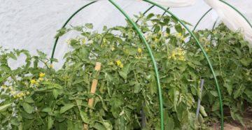 Как продлить вегетацию с помощью укрывного материала
