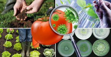Биологические и химические методы борьбы с вредителями на огороде