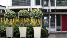 Контейнерные декоративные растения